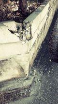 「ブロック破損 修理」についての画像