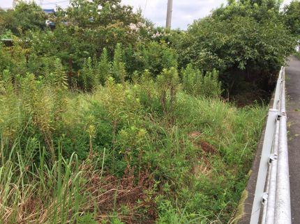植木、雑草撤去前