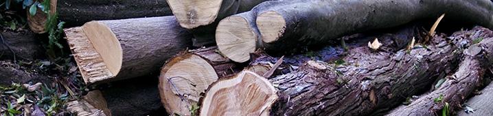 庭木の伐採・抜根
